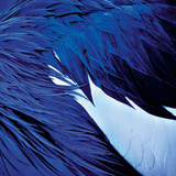 Blue Wings Affiches par Günter Lenz