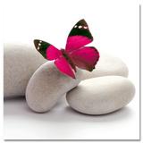 Papillon Plakater