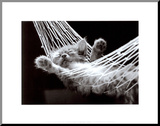 Cat Nap II Mounted Print by David Mcenery