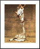 Girafa, primeiro beijo Impressão montada por Ron D'Raine