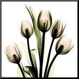Crystal Flowers X-ray, Tulip Bouquet Mounted Print by Albert Koetsier