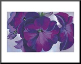 Petunias, c.1925 Mounted Print by Georgia O&#39;Keeffe