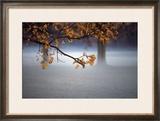 Fog Leaf Framed Giclee Print by Derek Jecxz