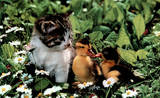 Little Friends (Kitten and 2 Chicks) Art Poster Print Poster