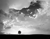 Lone Tree Posters par  Aledanda