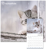 Rachael Hale Cats - 2013 Wall Calendar Calendars
