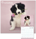 Rachael Hale Dogs - 2013 Wall Calendar Calendars