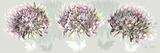 Pink Allure I Prints by Sally Scaffardi