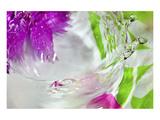 Connie Publicover - Splash Zone Speciální digitálně vytištěná reprodukce