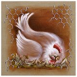 Poule Tete Basse Prints by Stephanie Holbert