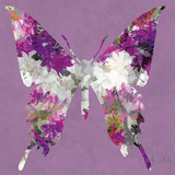 Butterfly Prints by Sally Scaffardi