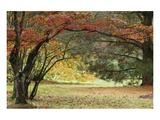 Chris Farrow - Shef Park Speciální digitálně vytištěná reprodukce