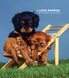 I Love Puppies - 2013 Hardcover Weekly Engagement Calendar Calendars