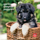German Shepherd Puppies - 2013 Mini Calendar Calendars
