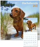 Dachshunds - 2013 Wall Calendar Calendars