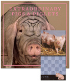 Extraordinary Pigs - 2013 Wall Calendar Calendars