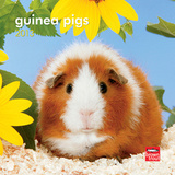 Guinea Pigs - 2013 Mini Calendar Calendars