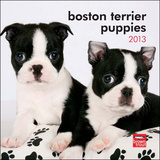 Boston Terrier Puppies - 2013 Mini Calendar Calendars