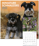 Schnauzers, Miniature (Intl) - 2013 Wall Calendar Calendars