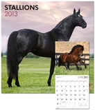 Stallions - 2013 Wall Calendar Calendars