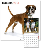 Boxers (Intl) - 2013 Wall Calendar Calendars