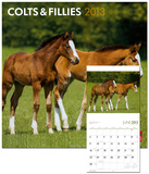 Colts &amp; Fillies - 2013 Wall Calendar Calendars