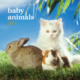 Baby Animals - 2013 Mini Wall Calendar Calendars