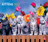 Kittens, For The Love Of - 2013 Deluxe Wall Calendar Calendars