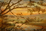 Tranquil Landscape Prints by Mark Chandon