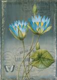 Black Botanical I Prints by Emma Hill