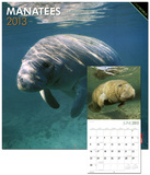 Manatees - 2013 Wall Calendar Calendars