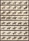 Jumping a Hurdle Kunstdrucke von Eadweard Muybridge