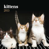 Kitten Cuddles - 2013 Mini Wall Calendar Calendars