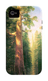 The Big Trees, Mariposa Grove, California iPhone 4/4S Case by Albert Bierstadt