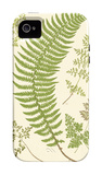 Ferns with Platemark IV iPhone 4/4S Case