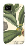 Exotic Foliage I iPhone 4/4S Case by  Vision Studio