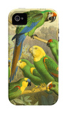 Tropical Birds I iPhone 4/4S Case by Cassel