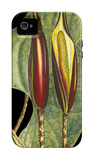 Tropical Plant on Black IV iPhone 4/4S Case