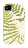 Ferns with Platemark V iPhone 4/4S Case