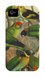 Tropical Birds IV iPhone 4/4S Case by Cassel