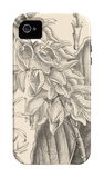 Orchid on Khaki III iPhone 4/4S Case by Samuel Curtis