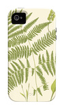 Ferns with Platemark I iPhone 4/4S Case