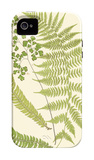 Ferns with Platemark III iPhone 4/4S Case