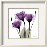 Royal Purple Gentian Trio Art by Albert Koetsier