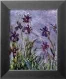 Iris Plakat av Claude Monet