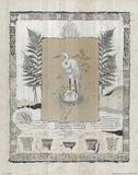Heron Crane (Study) Láminas