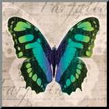 Butterflies II Mounted Print by Tandi Venter