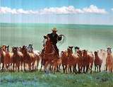 Cowboy West Animal Cow Range Corralling Posters
