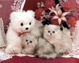 Cutest kittens &amp; Teddy Bear Posters