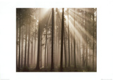 Filtered Light Print by Charles Bowman
